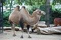 Amsterdam Zoo (3798541139).jpg