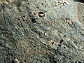 Andesitiese basalt, Hekpoort-formasie, d, Faerie Glen NR.jpg