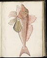 Animal drawings collected by Felix Platter, p1 - (129).jpg