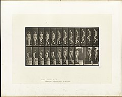 Animal locomotion. Plate 137 (Boston Public Library).jpg