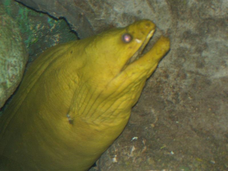 File:Animal marin1.jpg