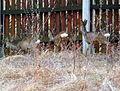 Animals13Slovakia8.JPG