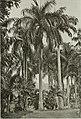 Annales du Jardin botanique de Buitenzorg (18220896818).jpg