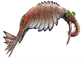 Anomalocaris canadensis is one of the many animal species that emerged in the Cambrian explosion, starting some 542 million years ago, and found in the fossil beds of the Burgess shale. Anomalocaris2019.jpg