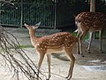 Antwerp Zoo (12210993694).jpg