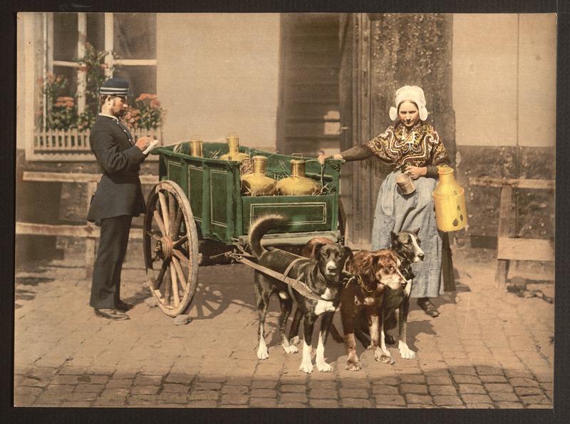 File:Antwerpen, Vlaamse melkmeid, photochrom (unedited original).tiff