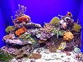 Aquarium Genoa 69.JPG