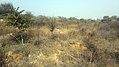 Aravalli BDPark ph1.jpg