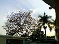 Arbol de primavera, palmera y el sol. - panoramio.jpg