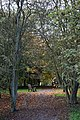 Arboretum path - Beale Arboretum - West Lodge Park, Hadley Wood Enfield London.jpg