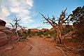 Arches Nationalpark primitive trail 02.jpg