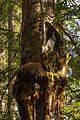 Armstrong Redwoods State Natural Reserve - 04.jpg