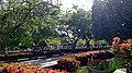 Asoka yard.jpg
