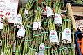 Asparagales - Asparagus officinalis - 2.jpg