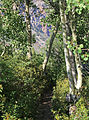 Aspen path Lundy Canyon.jpg