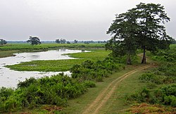 Flooded grasslands in Kaziranga National Park