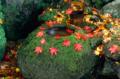 Autumn Japan.png