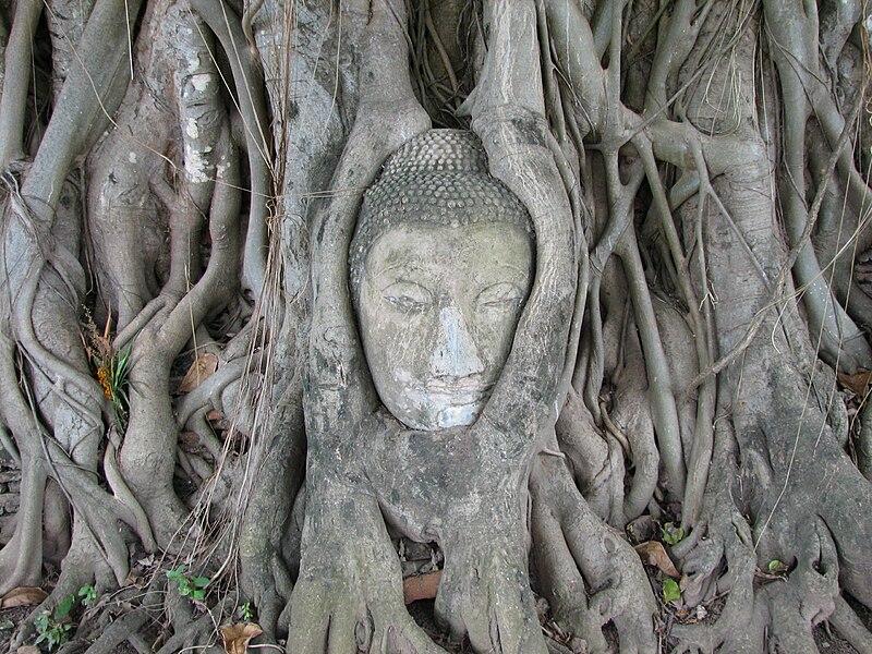 File:Ayutthaya buddha 2.jpg
