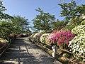 Azalea flowers near Senkoji Park Top Observation Deck.jpg