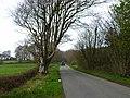 B7052 near Sloehabbert - geograph.org.uk - 322644.jpg