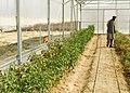 Back to the basics, ADT assesses development of demonstration farm 120903-A-GH622-022.jpg