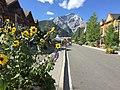 Banff Sunshine and Sunflowers.jpg