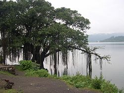 Punjabi/Vocabulary/Trees - Wikibooks, open books for an open
