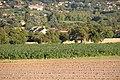 Bardonnex, Switzerland - panoramio (66).jpg