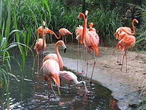 Barranquilla Zoológico Flamencos
