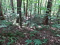 Battle Creek Cypress Swamp 60.jpg