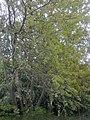 Baumbestimmung.jpg