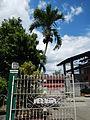 Bay,Lagunajf4090 05.JPG
