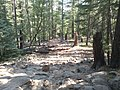 Bear Canyon Lake, Payson, AZ 85541, USA - panoramio (1).jpg