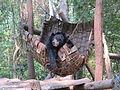 Bear in Hammock.JPG