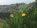 Beautiful shot captured at Horton Plains National Park.jpg