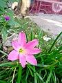 Beauty Pink.jpg
