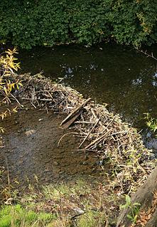 Sonoma Creek Stream in California