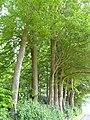 Bedburg-Hau Moyländer Allee 2-4 LSG Moyländer Wald PM18-17.jpg