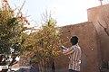 Berberis 13960722 11.jpg