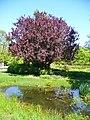 Berlin - Gaerten der Welt (Gardens of the World) - geo.hlipp.de - 36567.jpg