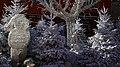 Biot (Alpes Maritimes) Weihnachtsdekoration.jpg