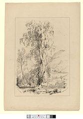 Birch Tree, Llangollen