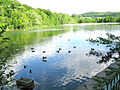 Bird sanctuary, Marlfield Lake, Clonmel. June 2010.jpg