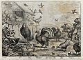 Birds in a farmyard; magpie, sparrow, turkey, dove, cockerel Wellcome V0022164.jpg