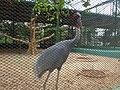 Birds in the Bird Aviary, Nandankanan - Birdssm.jpg