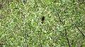 Birds of Nepal - Wiki Loves Birds 48.jpg