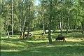 Björkö-Birka - KMB - 16000300020362.jpg