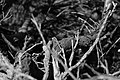 Black and white forest twigs.jpg