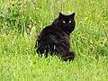 Black pussy - panoramio.jpg