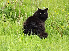 worlds fattest cat